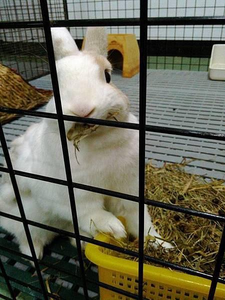rabbit1032