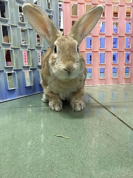 rabbit1115