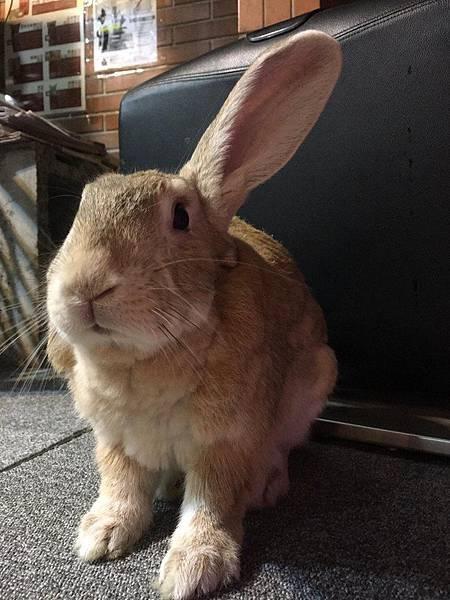rabbit1231