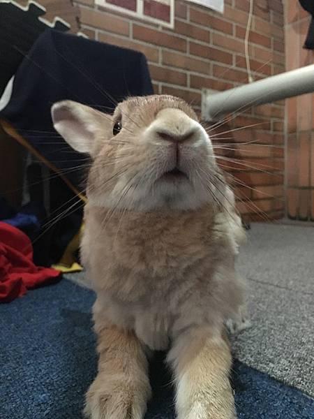 rabbit1061