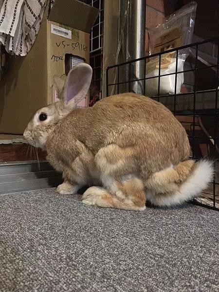 rabbit1353