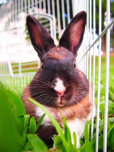 rabbit1121