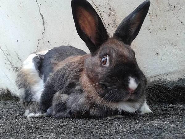 rabbit1097