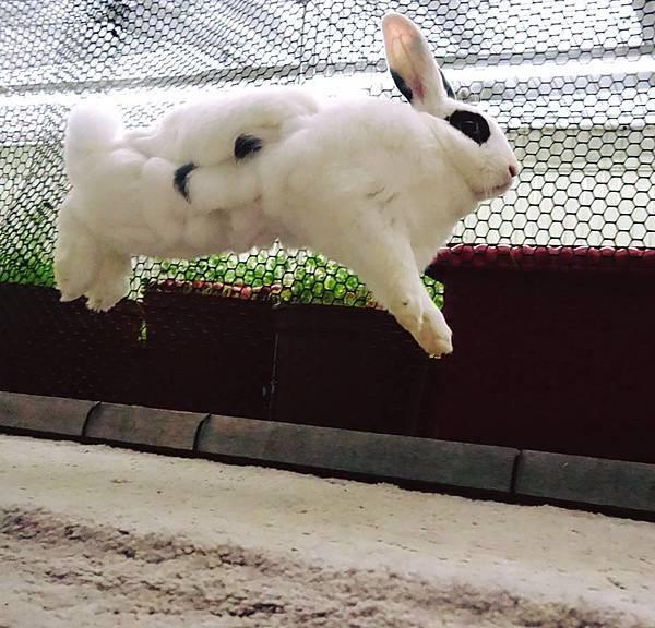 rabbit1240