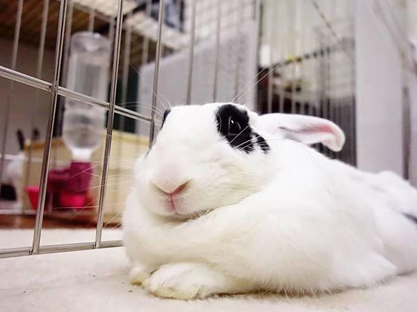 rabbit1234