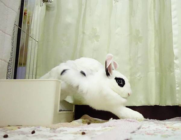 rabbit1328