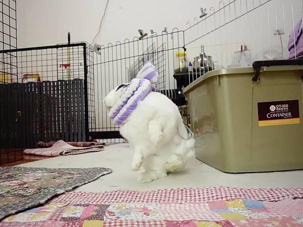 rabbit1068