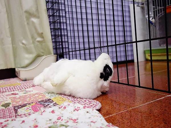 rabbit1241
