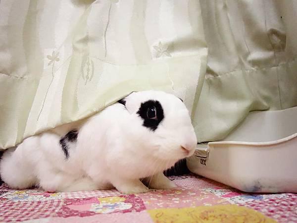 rabbit1167