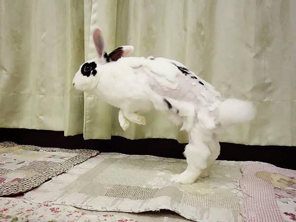 rabbit1041