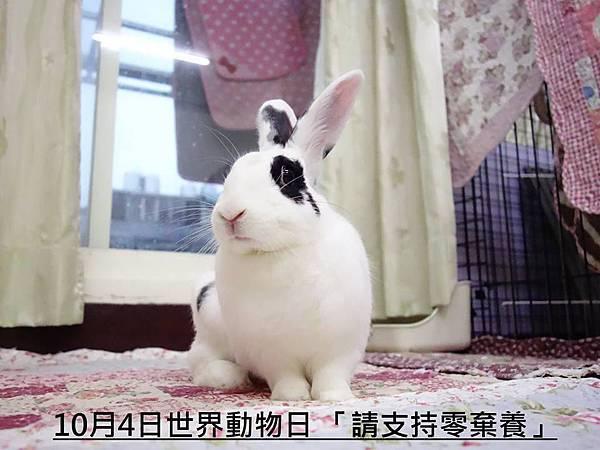 rabbit1141