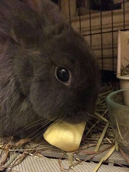 rabbit1365