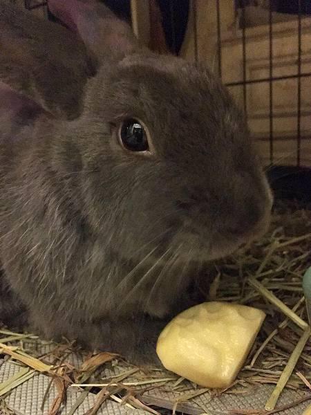 rabbit1364