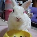 rabbit1084