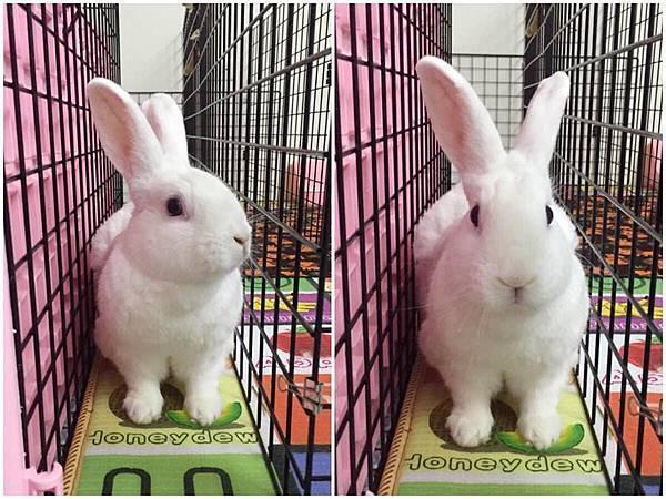 rabbit1089