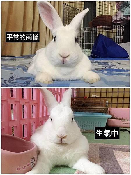 rabbit1033