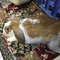 rabbit1008