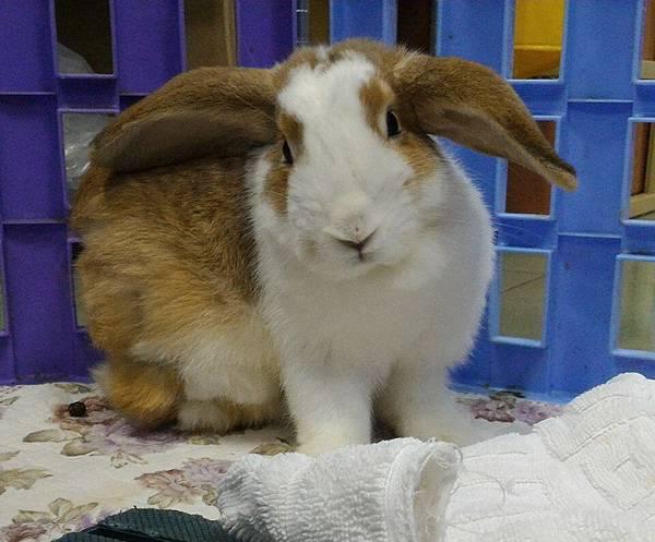 rabbit1181
