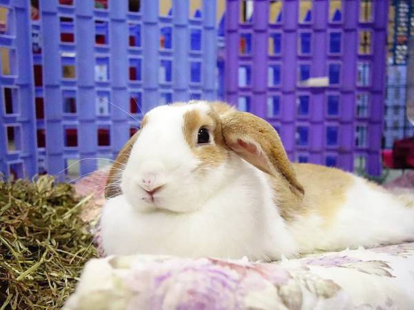 rabbit1048