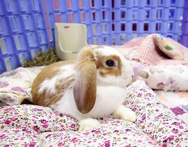 rabbit1079