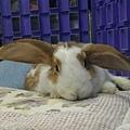 rabbit1035