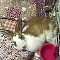 rabbit1274
