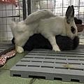 rabbit1119