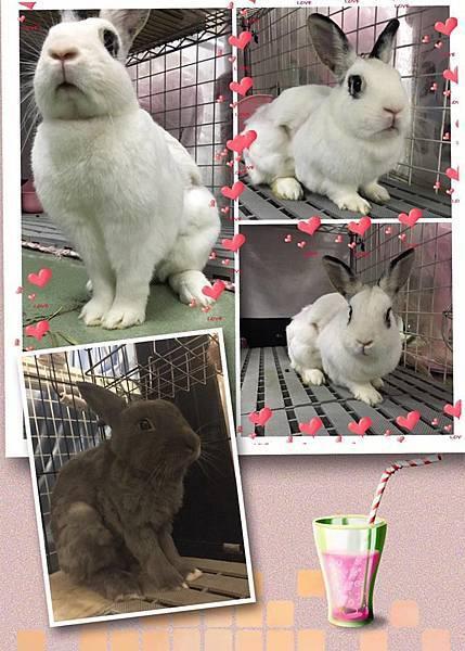 rabbit1117