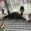 rabbit1116