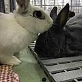 rabbit1113
