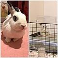 rabbit1199