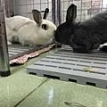 rabbit1114