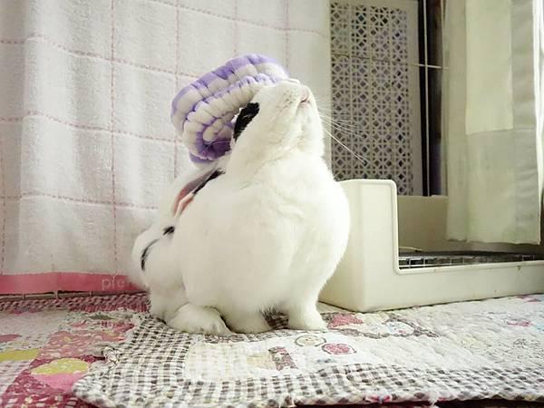 rabbit1065