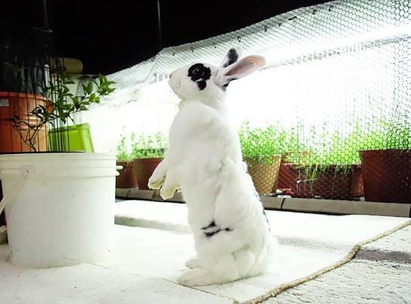 rabbit1388