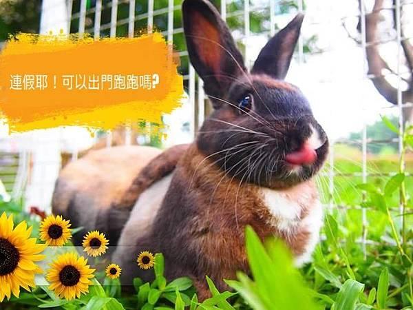 rabbit1196