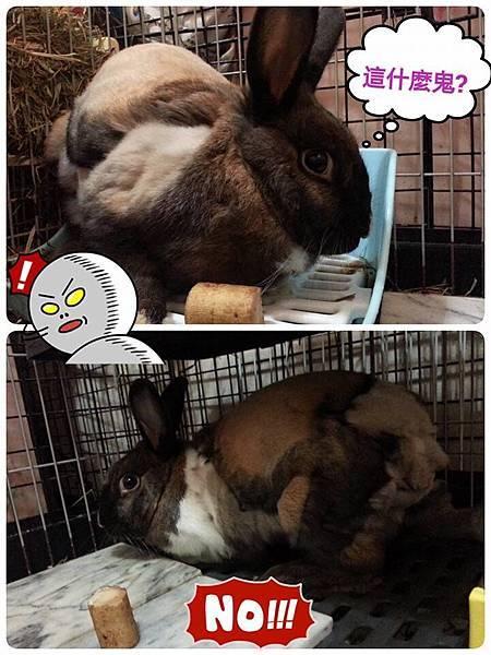 rabbit1075