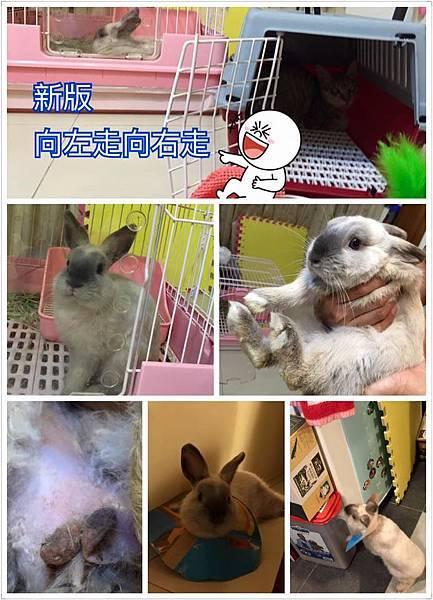 rabbit1085