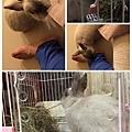 rabbit1239