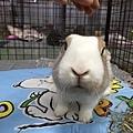 rabbit1315