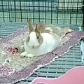rabbit1343