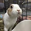 rabbit1314