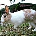 rabbit1335