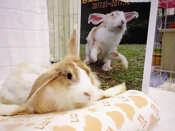 rabbit1301