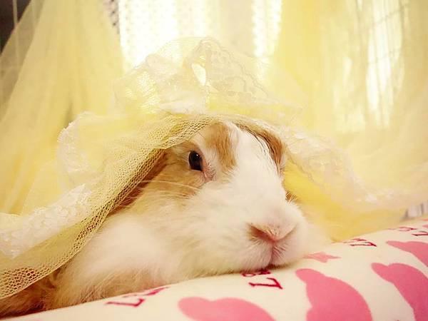 rabbit1004