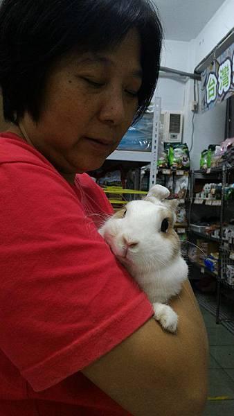 rabbit1050
