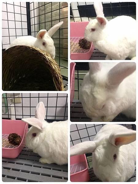 rabbit1390