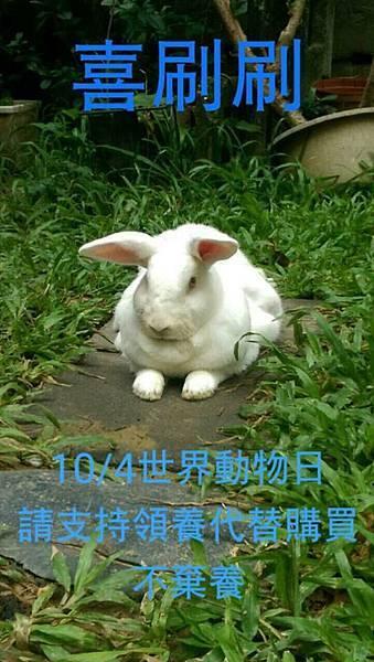 rabbit1148