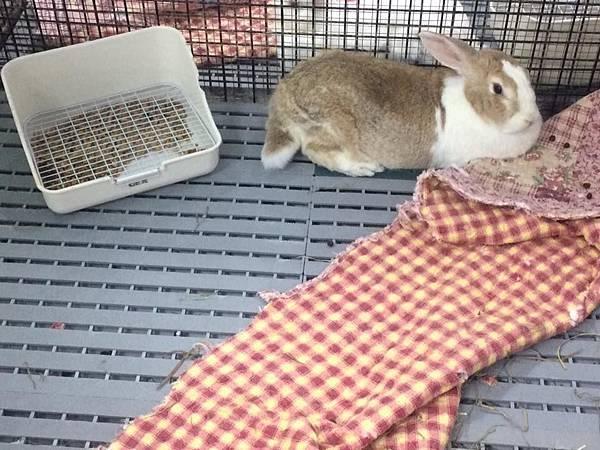 rabbit1393