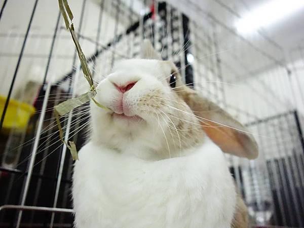 rabbit1006