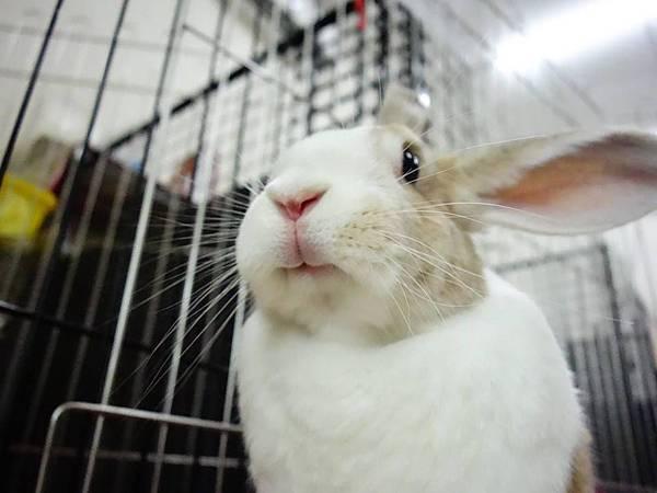 rabbit1222